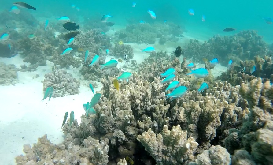 Snorkelling Turquoise Bay 4