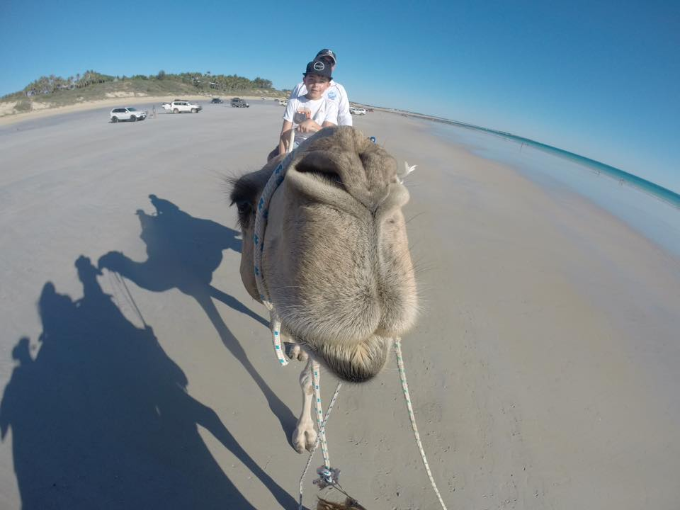 camel at broome