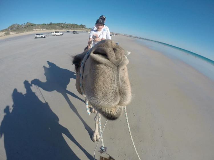 camel at broome